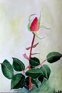 Rose -16.5x23.5 cm